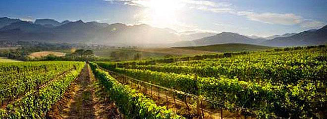 tailor made safaris - Cape Winelands