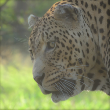 A leopard as seen through binoculars priced under EUR 150.
