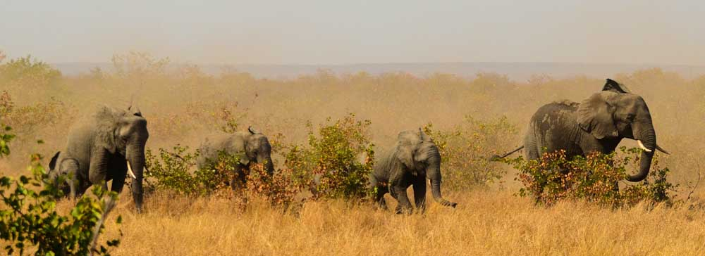 tailor made safaris - Kruger National Park - elephants