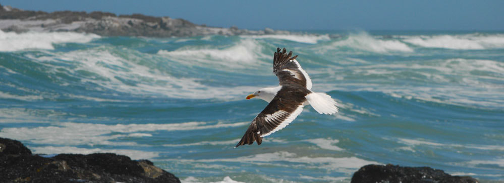 tailor made safaris - Langebaan - West Coast National Park