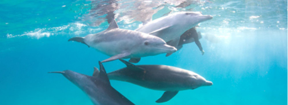 tailor made safaris - mozambique - ponta d'ouro - swimming with wild dolphins