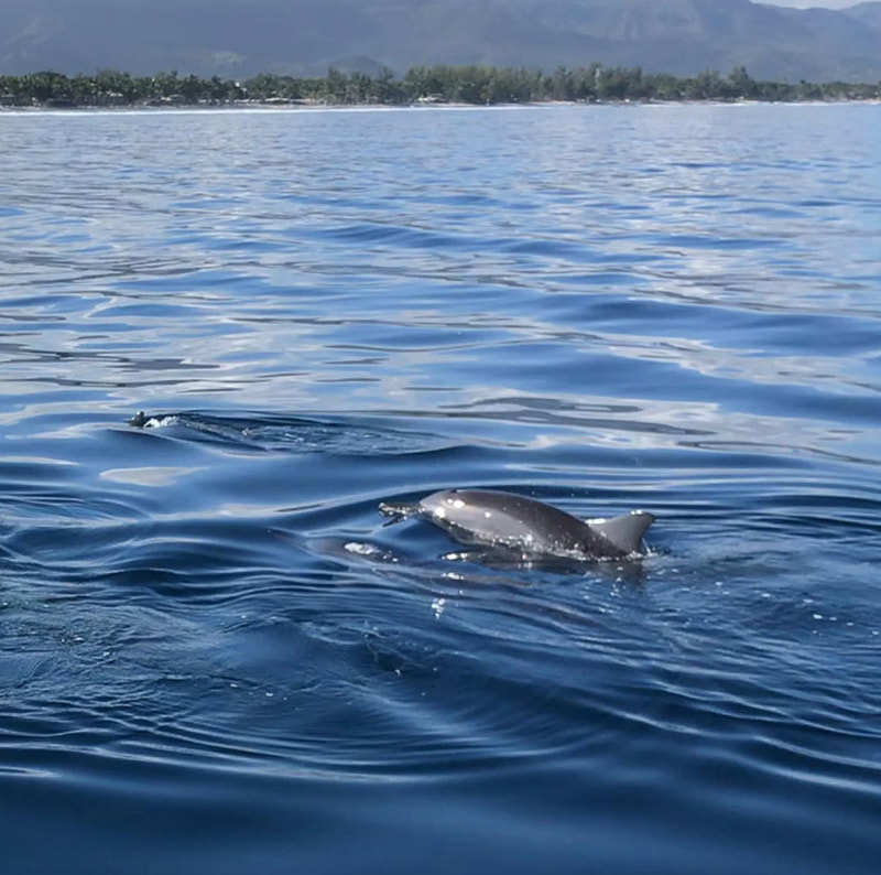 Tailor Made Safaris - Swim with dolphins