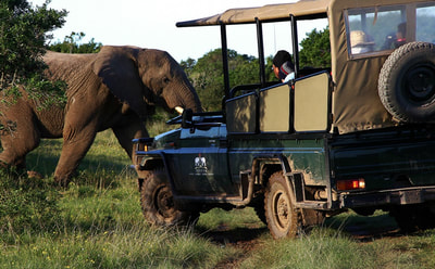Tailor Made Safaris - guided game drives in Addo Elephant National Park