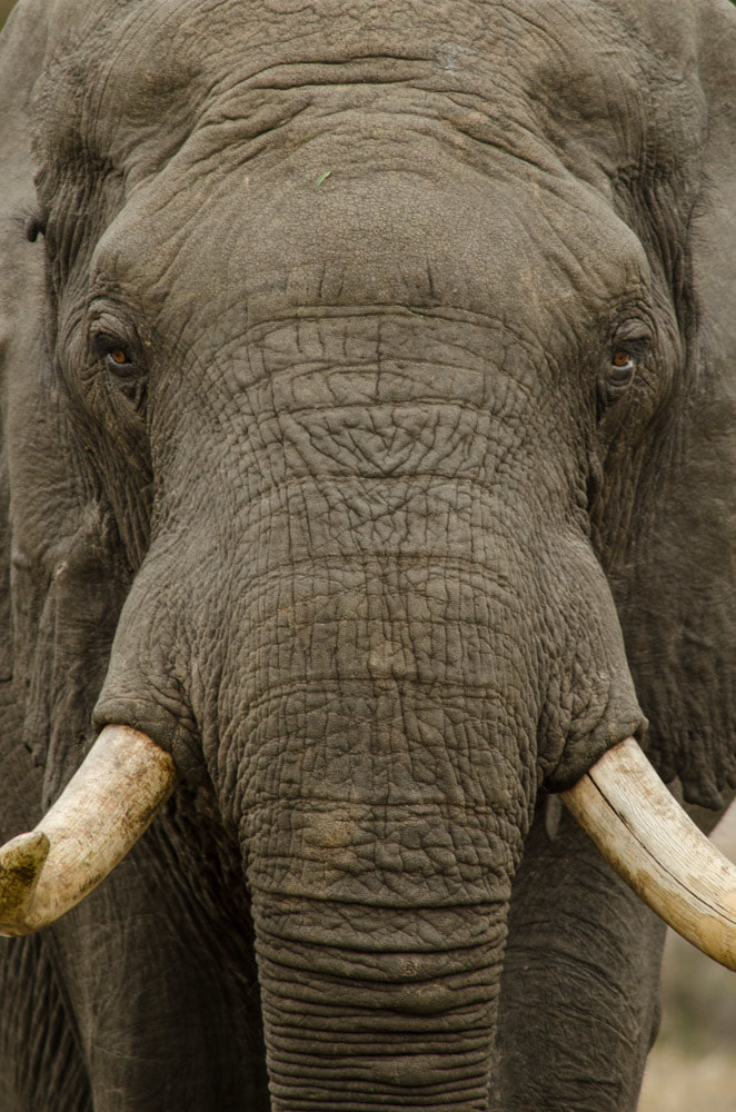 Tailor made safaris - Elephant close up