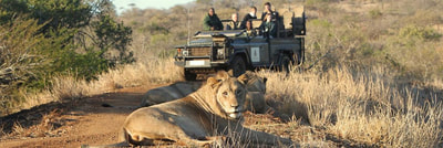 Guided game drives in kwaZulu Natal